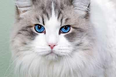 mancare pisica superpremium